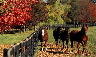 Tryon Nc Real Estate Landrum Sc Realty Tryon Horse Farms